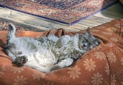 Почему кошка спит на спине с раздвинутыми задними лапами