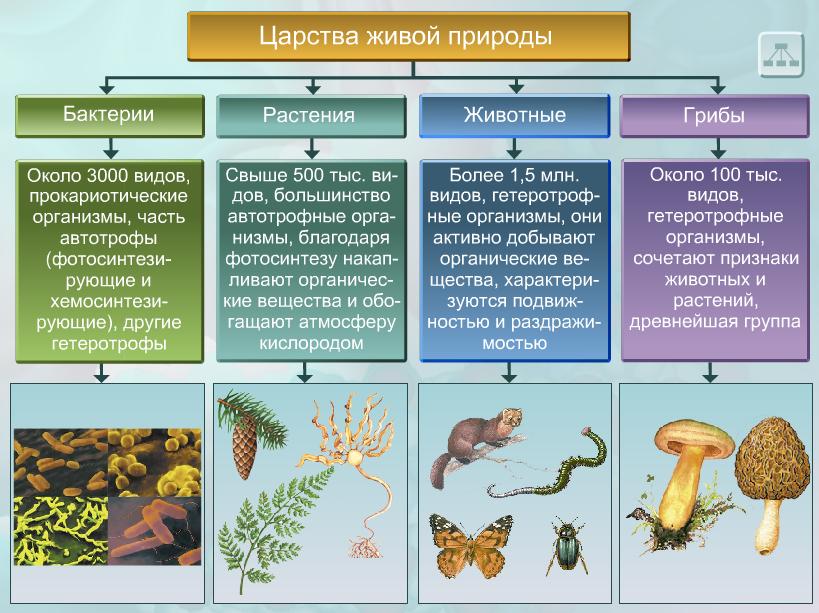 Пять царств живой природы
