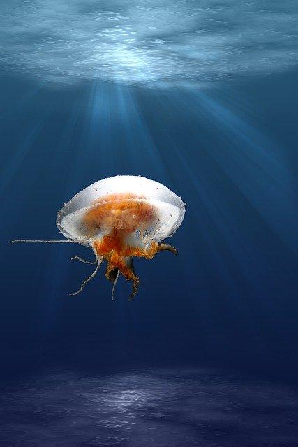 Веб камера: Аквариум с медузами