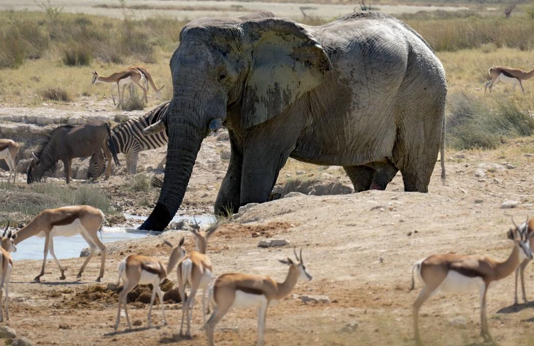 Веб-камера в парке слонов Тембе (Южная Африка)
