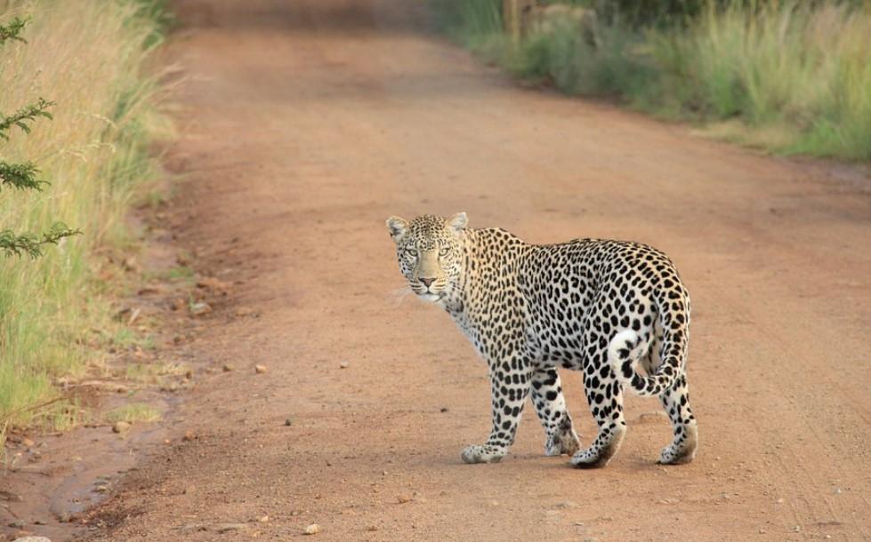 Веб-камера Нкорхо Пан (Африка)
