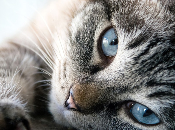 Веб камера в приюте для кошек TinyKittens